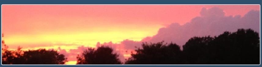 Beth Hilton Shrubbery Sunset